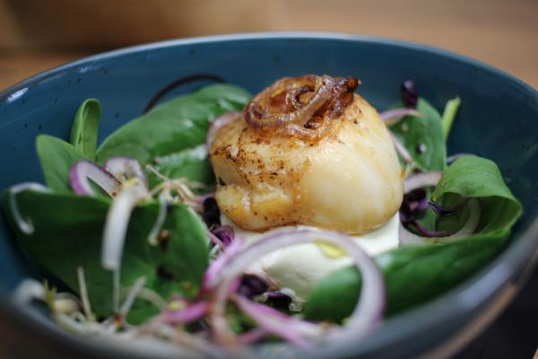 Jakobsmuscheln-auf-Salat