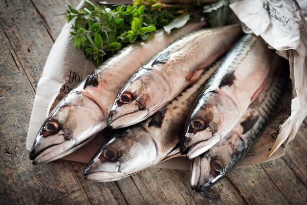 Ganze Makrelen - frisch, Seefrost