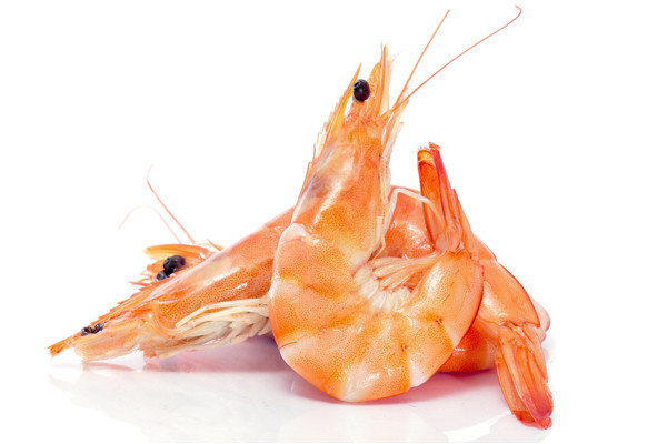Grönlandkrabben Kalt Wasser Shrimps