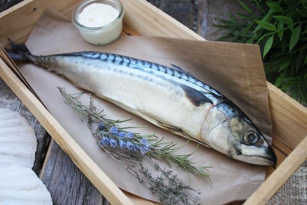 Makrele frisch Seefrost
