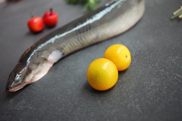 Frischen Aal Kaufen