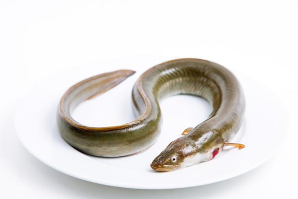 Aal gesalzen